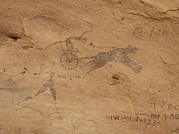Pictograph Posters - Pictograph Of Horsedrawn Chariot, Libya Poster by David Parker