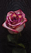 Picturesque Satin Rose Print by Linda Tiepelman