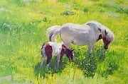 Horse And Flowers Framed Prints - Piebald horse and foal Framed Print by William Ireland