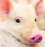 Snout Posters - Pig Art - Pretty In Pink Poster by Sharon Cummings