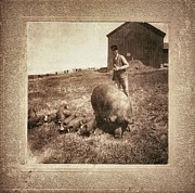 Old Person Prints - Pig Farm Print by Angela Wright
