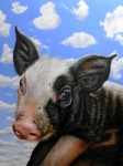 Domestic Animals Paintings - Pig in the Sky by Jurek Zamoyski