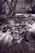 Pigeon Forge River Great Smoky Mountains Bw Print by Steve Gadomski