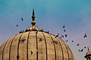 India Posters - Pigeons around dome of the Jama Masjid in Delhi in India Poster by Ashish Agarwal