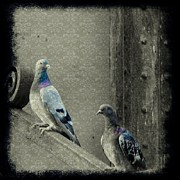 Victorian Digital Art - Pigeons In Damask by Gothicolors With Crows