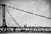 Black And White Birds Prints - Pigeons Sitting On Building Crane And Flying Print by Image by Ivo Berg (Crazy-Ivory)