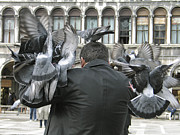 Touristes Photo Posters - Pigeons. Venice Poster by Bernard Jaubert