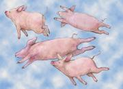 Pig Framed Prints - Pigs Fly Framed Print by Peggy Wilson