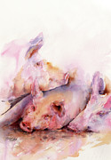 Wild Life Prints - Pigs in Clover Print by Stephie Butler