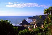 Pampas Grass Framed Prints - Piha Panorama Framed Print by Kevin Smith