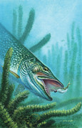 Pickerel Prints - Pike and Jig Print by JQ Licensing