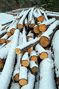 Lumber Industry Framed Prints - Pile of chopped logs covered in snow Framed Print by Sami Sarkis