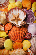 Seashells Prints - Pile of seashells Print by Garry Gay