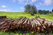 Autumn Landscape Art - Pile of trunks by Carlos Caetano