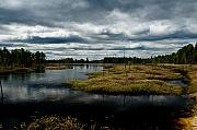 Pine Barrens Prints - Pine Barrens Print by Louis Dallara