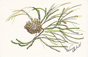 Holiday Notecard Originals - Pine Branch Offering by Michele Hollister - for Nancy Asbell