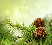 Branch Photos - Pine cones on branches with holiday background by Sandra Cunningham