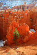 Elevation Framed Prints - Pine Hoodoos at Bryce Canyon Framed Print by Pierre Leclerc