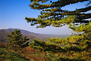 Scenic Drive Prints - Pine Tree And Forested Ridges Print by Raymond Gehman