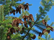Conifer Tree Prints - Pine Tree art prints Pine Cones Blue Sky Baslee Print by Baslee Troutman Fine Art Prints