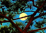 Pine Digital Art Framed Prints - Pine Tree Moon Framed Print by Bill Cannon