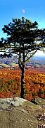 Mountains Posters - Pine Tree On Pilot Mountain North Carolina Poster by Bob Livengood