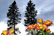 Pine Trees Metal Prints - Pine Trees And Roses Metal Print by Will Borden