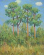 Texas Tim Webb - Pine Trees in Meyer Park