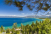 Californian Framed Prints - Pine Trees, Lake Tahoe, California, Usa Framed Print by Stuart Dee
