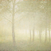 Languedoc-rousillon Prints - Pine Trees Through Mist Print by Paul Grand Image