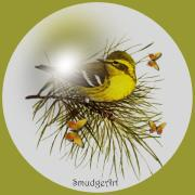 Pine Digital Art Framed Prints - Pine Warbler Framed Print by Madeline M Allen