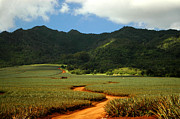 Hawai Art - Pineapple Country by Mark Gilman