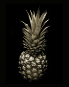 Fresh Food Originals - Pineapple in Sepia. by Terence Davis