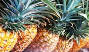 Pineapples Photos - Pineapples Anyone by Caroline Lomeli
