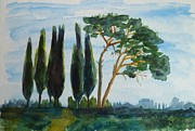 Tuscany Paintings - Pines and cypresses in a row by Christine Huwer