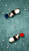 Ping Pong Art - Ping Pong Pandas by Michael  Murray