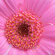 Pink Flower Prints Metal Prints - Pink a Boo Metal Print by Kathy Yates