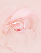 Rose Closeup Posters - Pink Abstract Rose Flower Poster by Jennie Marie Schell