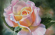 Watercolor Art Paintings - Pink and Peach Rose Bud by Sharon Freeman