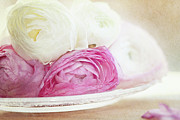 Pink White Framed Prints - Pink And White Ranunculus Flowers In Plate Framed Print by Isabelle Lafrance Photography