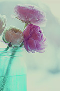 Focus On Foreground Photos - Pink And White Ranunculus Flowers In Vase by Isabelle Lafrance Photography