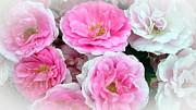 Pink And White Rose Melody Print by Chantal PhotoPix