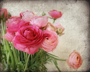 Still Life Photographs Mixed Media Prints - Pink Buttercups  Print by Batya Sagy