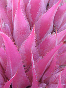 Soft Pink Metal Prints - Pink Cactus Metal Print by Nikki Marie Smith