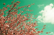 Sonya Kanelstrand Metal Prints - Pink cherry blossoms Metal Print by Sonya Kanelstrand