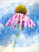 Coneflower Prints - Pink Coneflower on Blue Print by Carol Leigh