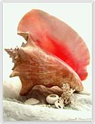 Blank Greeting Cards Prints - Pink Cong Shell Print by Danielle  Parent