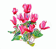 Flower Greeting Prints - Pink Cyclamen Print by Pat Yager