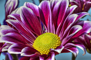 Patterned Prints - Pink daisy Print by Al Hurley