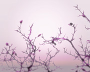 Flower Buds Prints - Pink Dawn Print by Ann Powell